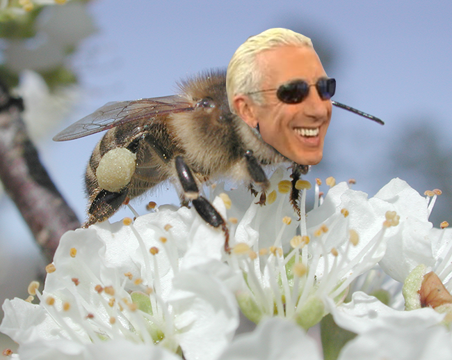 Bee Snider